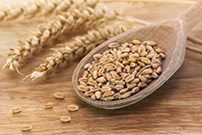 Wheat Factsheet
