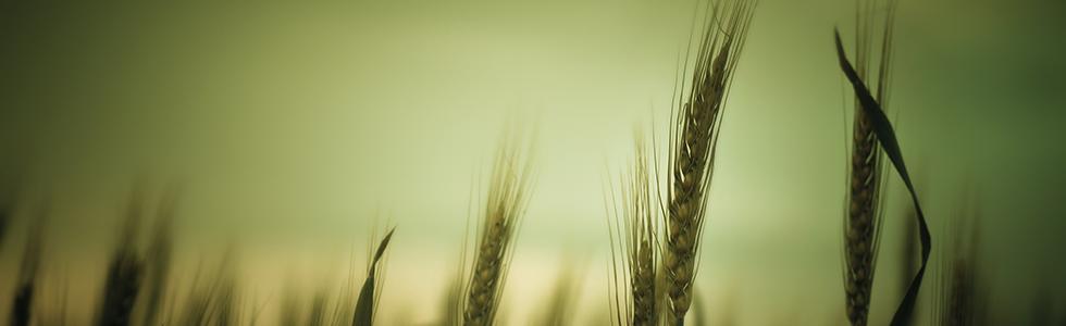 b_sustain_crop