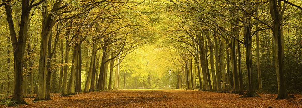 env_forest